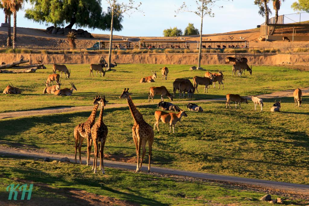 Safari Park, African Tran, Family Trip
